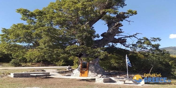Το εκκλησάκι του Αγίου Παϊσίου που είναι θεμελιωμένο μέσα σε δέντρο 2