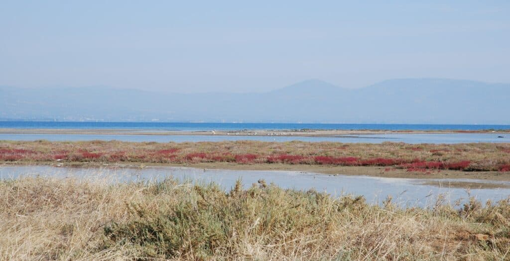 The destination in Attica that you can even see flamingos