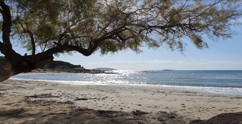 Κιτέζα: Η παραλία στην Αττική με τα ρηχά και καθαρά νερά1