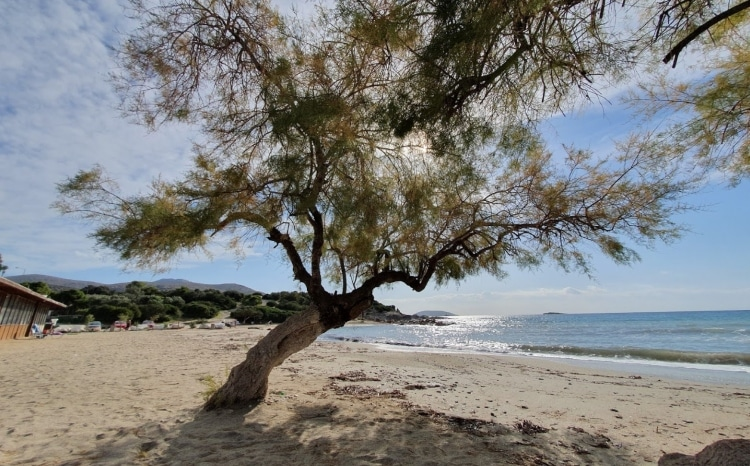 Kiteza: The beach in Attica with shallow and clear waters