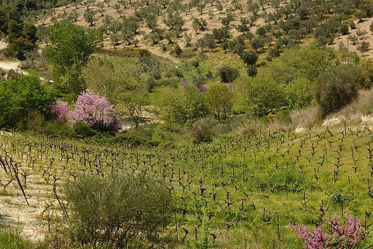 Nemea one-day trip
