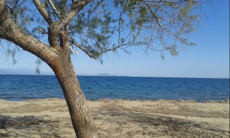 Μπορεί το καλοκαίρι να τελείωσε αλλά τα μπάνια στις παραλίες της Αττικής μπορούν να συνεχιστούν