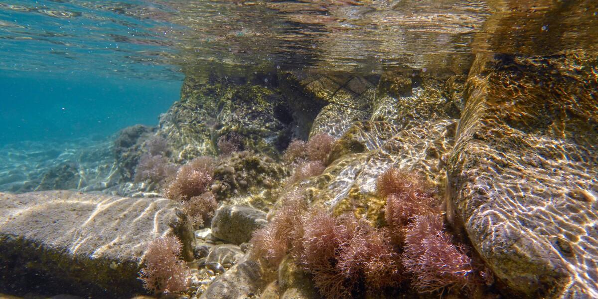 νησί Ιονίου